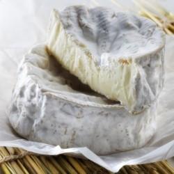 Camembert Aop lait cru