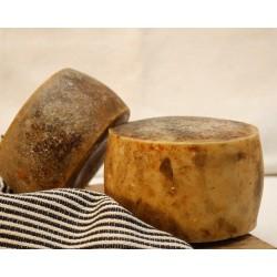 Pecorino di Osilo formaggio slow food